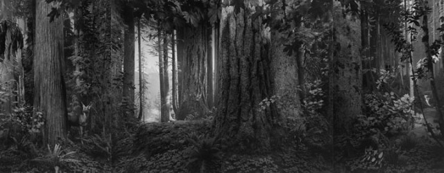 """Hiroshi Sugimoto, """"Olympic Rain Forest,"""" gelatin silver print, 2012 (courtesy Pace Gallery)"""