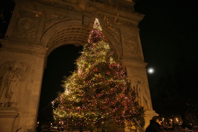 Washington Square Park tree will be lit on December 10 (photo courtesy )