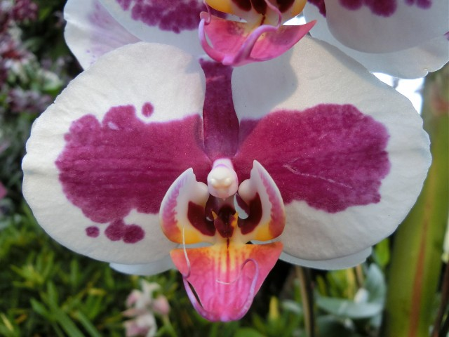 This week in new york orchids are beautiful from up close and from far away in beautiful show at the new mozeypictures Gallery