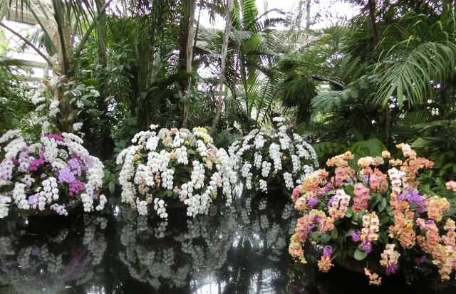 This week in new york nybg orchid show offers visitors a chance to reflect on the beauty of nature photo mozeypictures Gallery