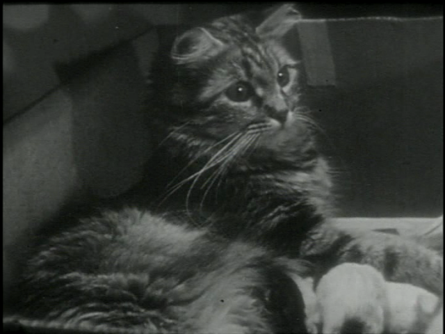Alexander Hammid and Maya Derens PRIVATE LIFE OF A CAT is part of feline festivities at Museum of the Moving Image