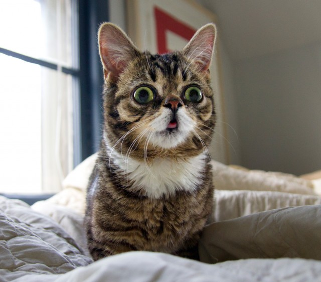 Lil BUB will make a special appearance at the Museum of the Moving Image on January 30