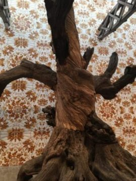A tree grows in Chelsea at the Lisson Gallery (photo by twi-ny/mdr)