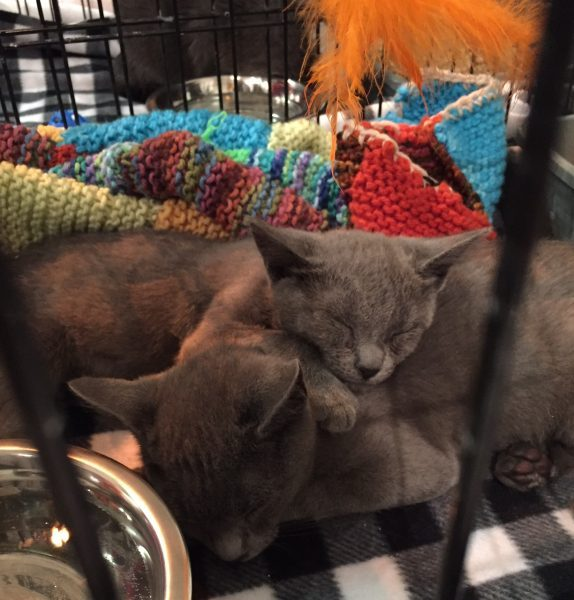 Cuteness abounds at inaugural Cat Camp NYC at Metropolitan Pavilion (photo by twi-ny/ees)